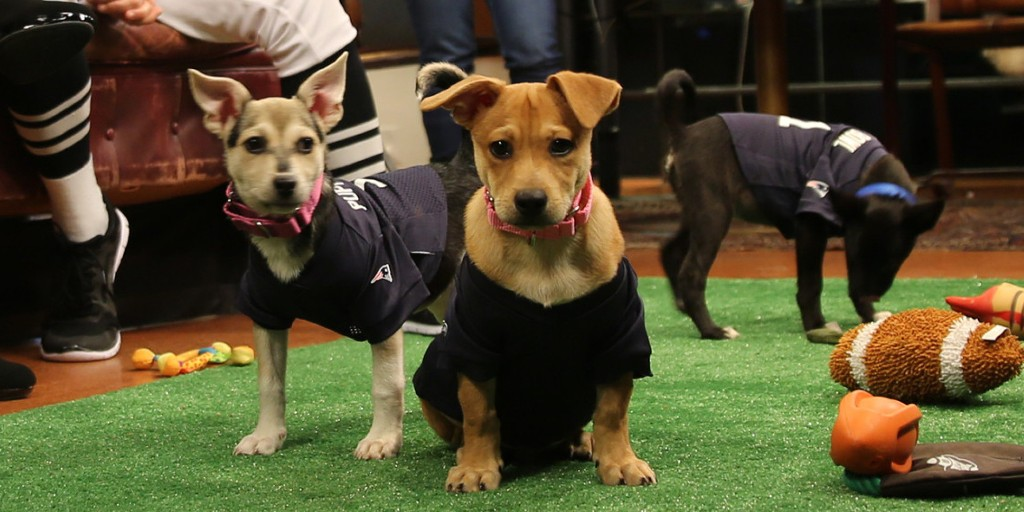 10-Facts-You-Don't-Know-about-Puppy-Bowl-16 5 Important Considerations to Make Before Buying Your Wedding Dress
