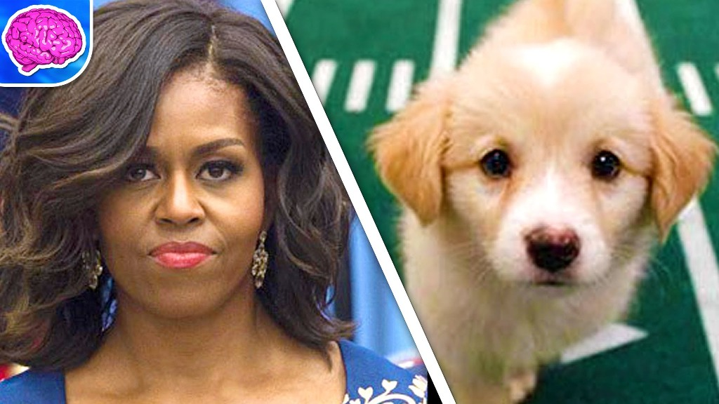 10-Facts-You-Don't-Know-about-Puppy-Bowl-17 Top 10 Facts You Don't Know about Puppy Bowl