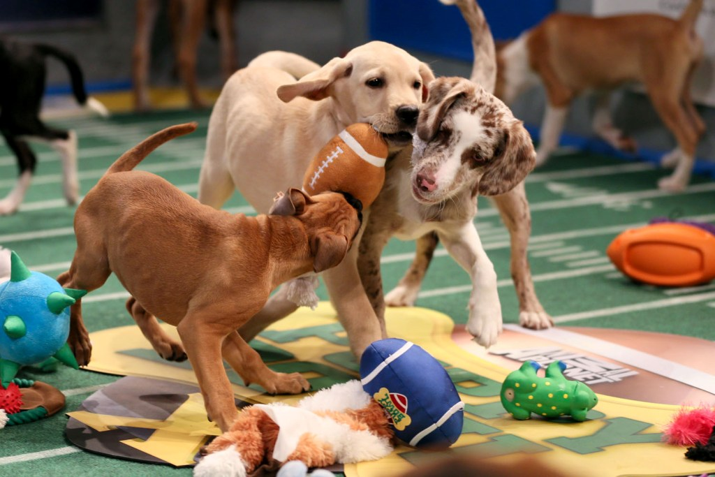 10-Facts-You-Don't-Know-about-Puppy-Bowl-2 5 Important Considerations to Make Before Buying Your Wedding Dress