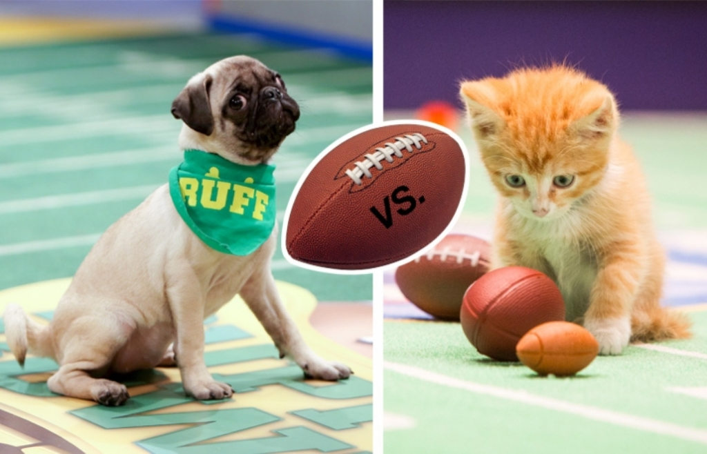 10-Facts-You-Don't-Know-about-Puppy-Bowl-22 5 Important Considerations to Make Before Buying Your Wedding Dress