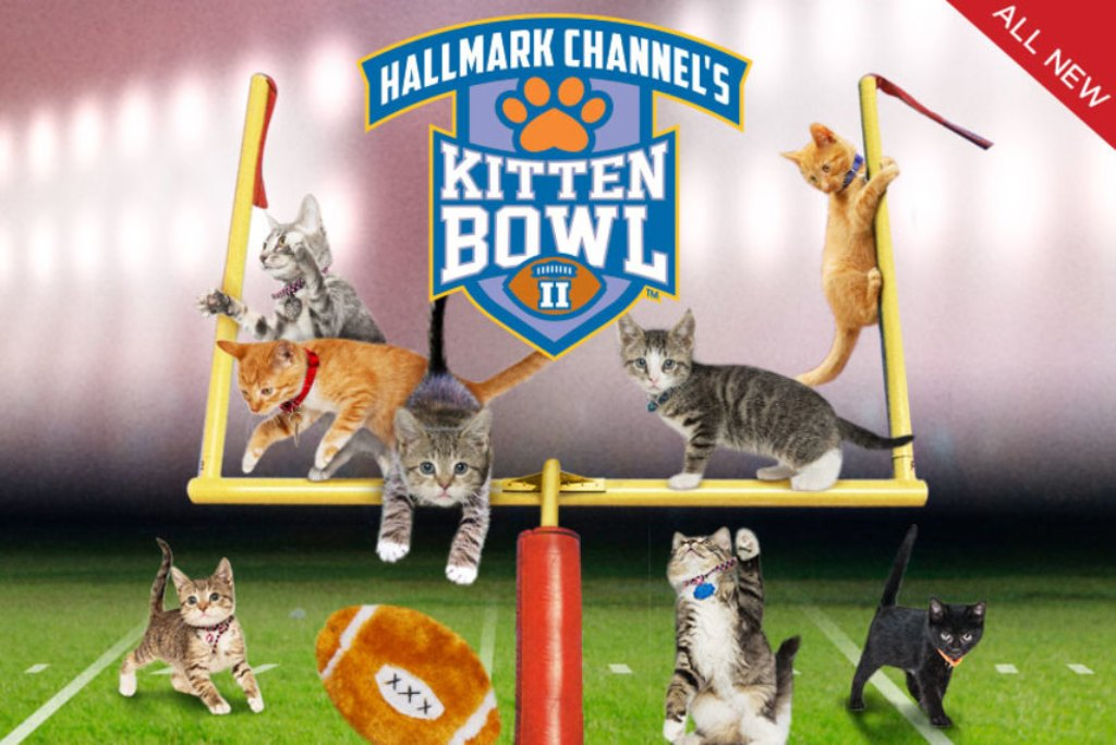 10-Facts-You-Don't-Know-about-Puppy-Bowl-23 5 Important Considerations to Make Before Buying Your Wedding Dress