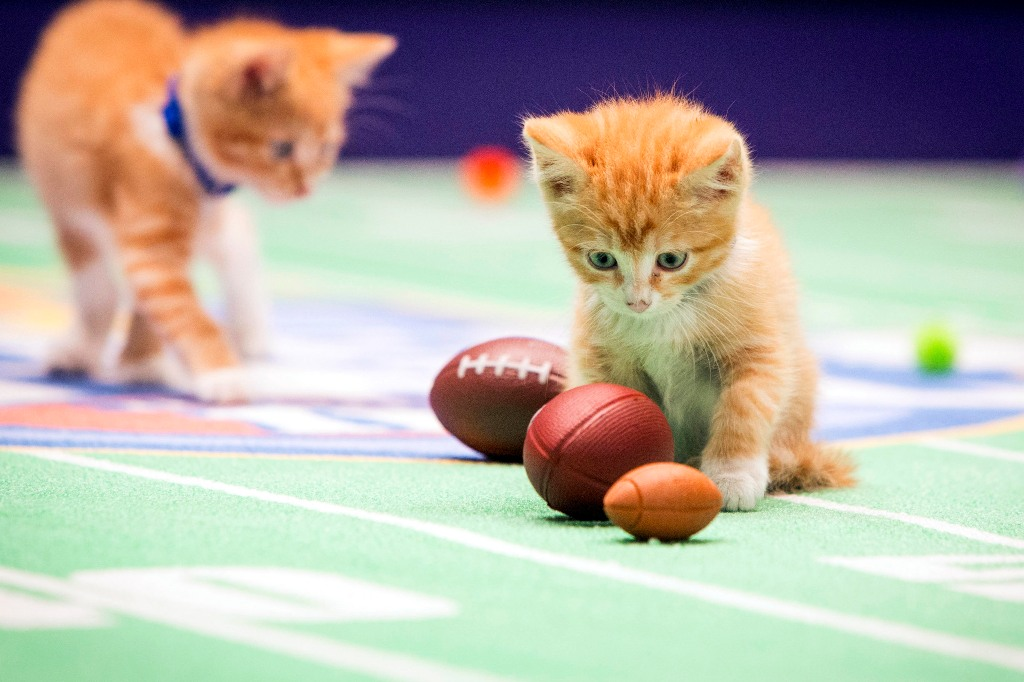 10-Facts-You-Don't-Know-about-Puppy-Bowl-24 5 Important Considerations to Make Before Buying Your Wedding Dress