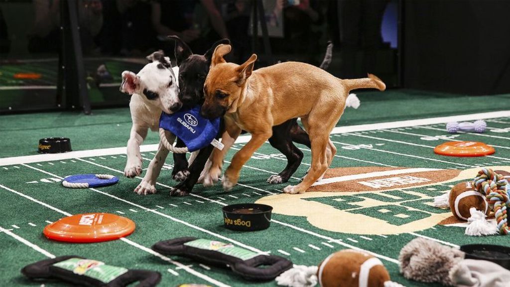 10-Facts-You-Don't-Know-about-Puppy-Bowl-25 5 Important Considerations to Make Before Buying Your Wedding Dress