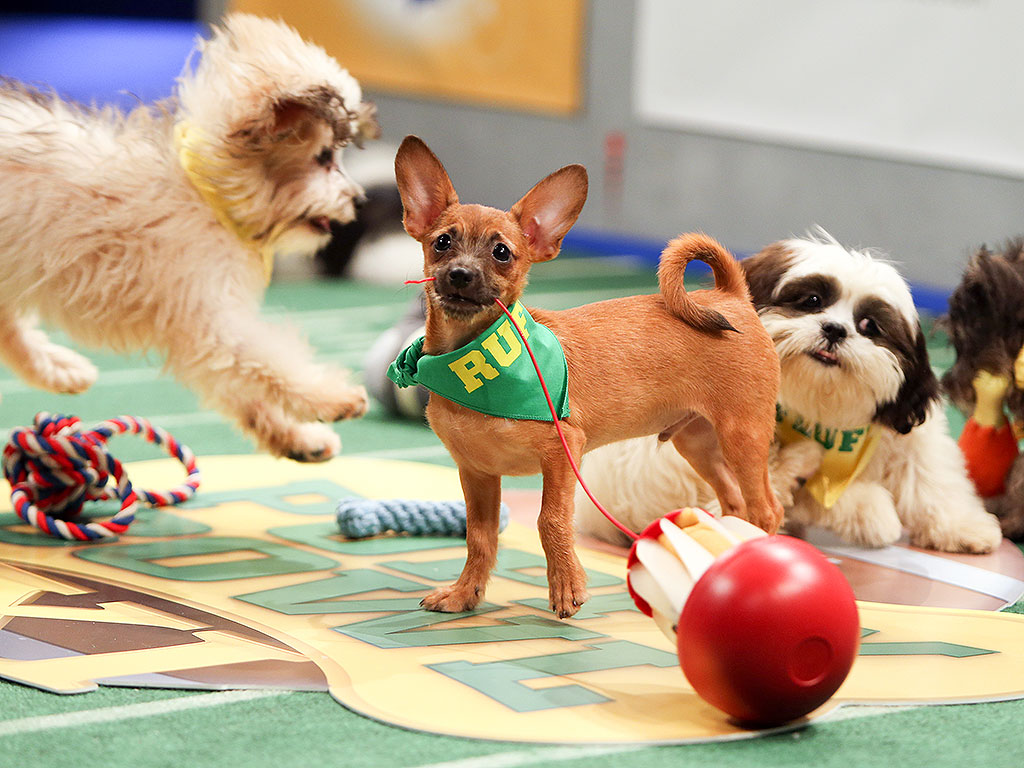 10-Facts-You-Don't-Know-about-Puppy-Bowl-26 5 Important Considerations to Make Before Buying Your Wedding Dress