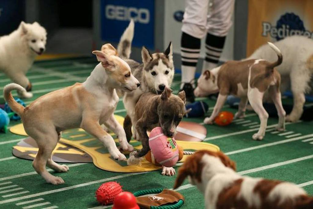 10-Facts-You-Don't-Know-about-Puppy-Bowl-3 5 Important Considerations to Make Before Buying Your Wedding Dress