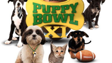Photo of Top 10 Facts You Don't Know about Puppy Bowl