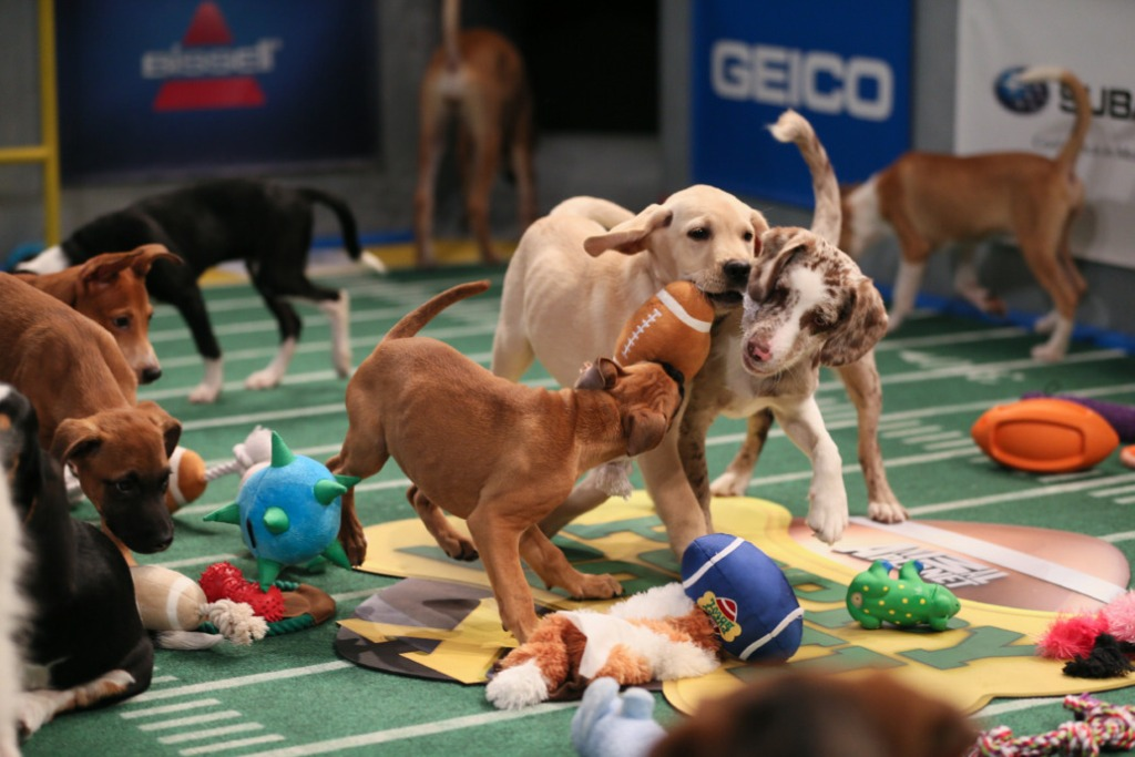 10-Facts-You-Don't-Know-about-Puppy-Bowl-4 Top 10 Facts You Don't Know about Puppy Bowl