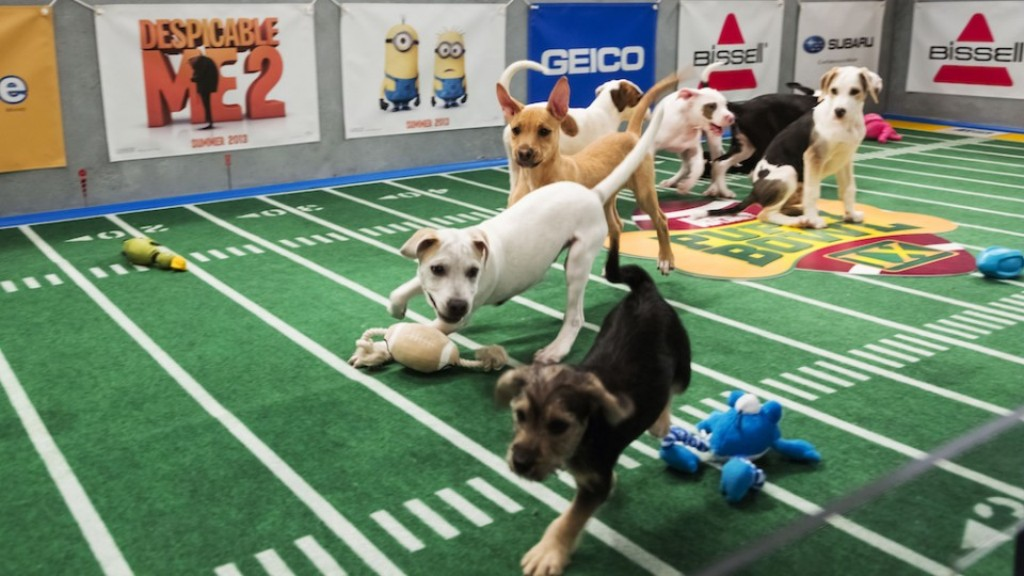 10-Facts-You-Don't-Know-about-Puppy-Bowl-6 5 Important Considerations to Make Before Buying Your Wedding Dress