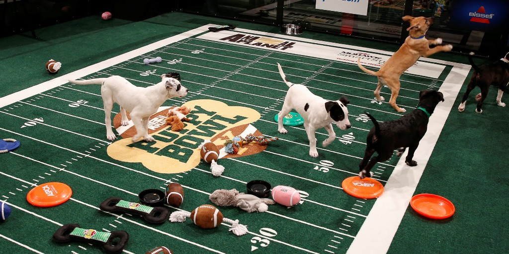 10-Facts-You-Don't-Know-about-Puppy-Bowl-8 5 Important Considerations to Make Before Buying Your Wedding Dress