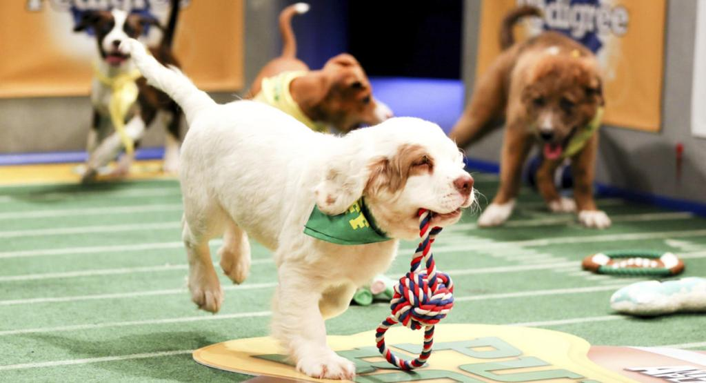 10-Facts-You-Don't-Know-about-Puppy-Bowl-9 5 Important Considerations to Make Before Buying Your Wedding Dress