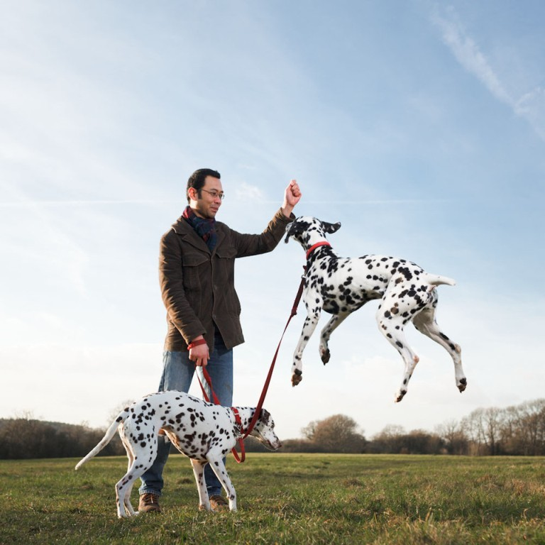 10-Uses-for-the-Dalmatian-Dog-What-Are-They-281 10 Uses for the Dalmatian Dog, What Are They?
