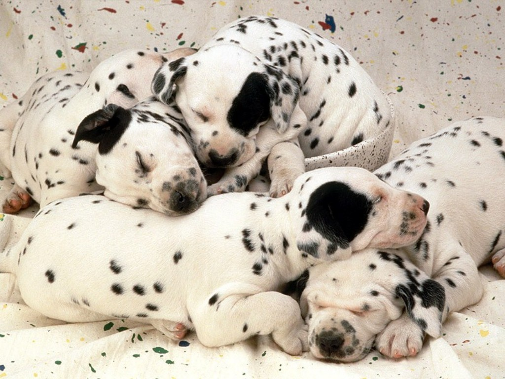 how to stop hemorrhaging after birth dogs