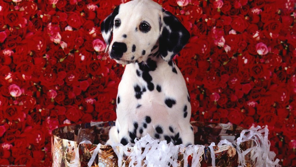 10-Uses-for-the-Dalmatian-Dog-What-Are-They1 10 Uses for the Dalmatian Dog, What Are They?