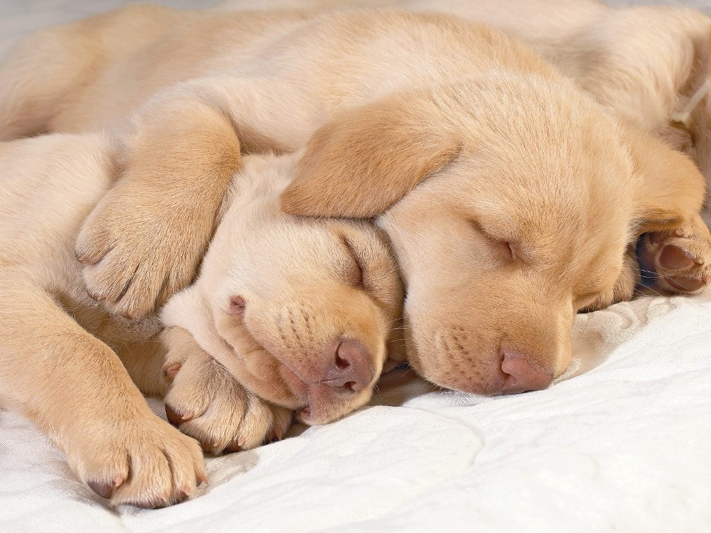 5-Interesting-Facts-Revealing-What-Your-Dog-Dreams-About-10 5 Interesting & Weird Facts Revealing What Your Dog Dreams About