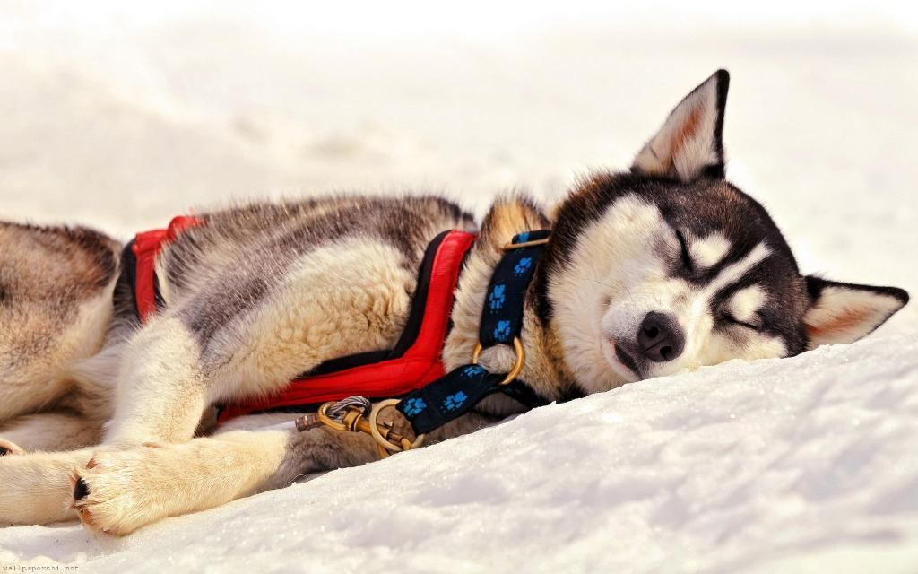 5-Interesting-Facts-Revealing-What-Your-Dog-Dreams-About-14 5 Interesting & Weird Facts Revealing What Your Dog Dreams About
