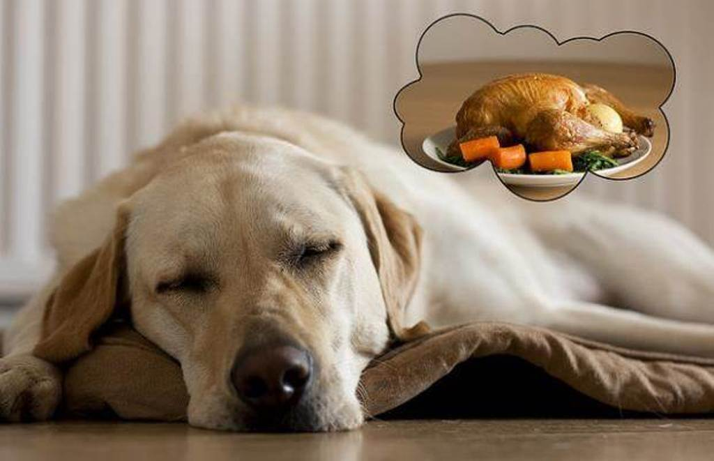 5-Interesting-Facts-Revealing-What-Your-Dog-Dreams-About-16 5 Interesting & Weird Facts Revealing What Your Dog Dreams About