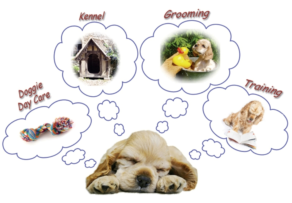 5-Interesting-Facts-Revealing-What-Your-Dog-Dreams-About-17 5 Interesting & Weird Facts Revealing What Your Dog Dreams About