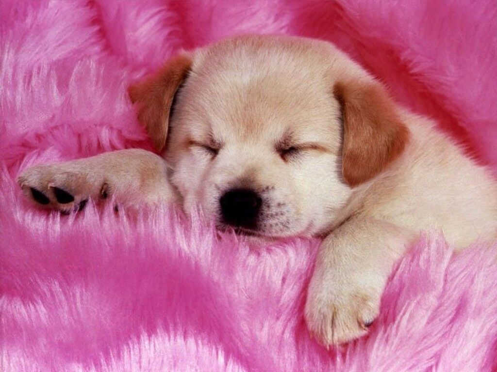 5-Interesting-Facts-Revealing-What-Your-Dog-Dreams-About-23 5 Interesting & Weird Facts Revealing What Your Dog Dreams About
