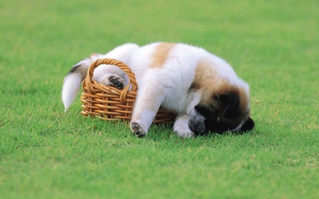 5-Interesting-Facts-Revealing-What-Your-Dog-Dreams-About-24 5 Interesting & Weird Facts Revealing What Your Dog Dreams About