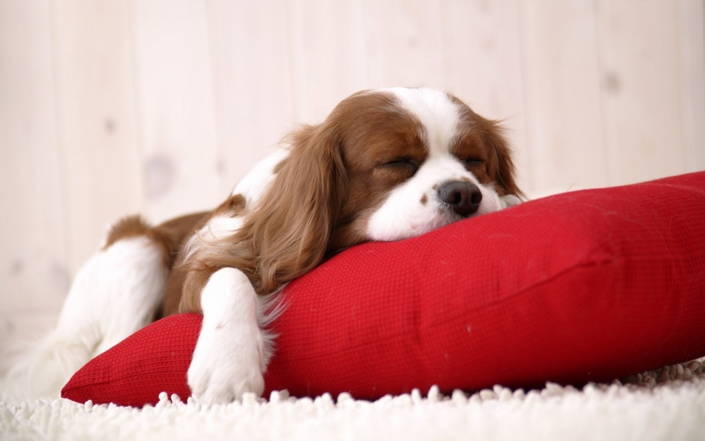 5-Interesting-Facts-Revealing-What-Your-Dog-Dreams-About-25 5 Interesting & Weird Facts Revealing What Your Dog Dreams About