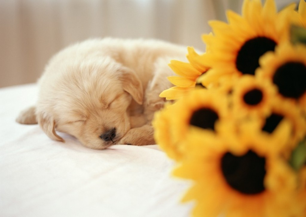 5-Interesting-Facts-Revealing-What-Your-Dog-Dreams-About-27 5 Interesting & Weird Facts Revealing What Your Dog Dreams About