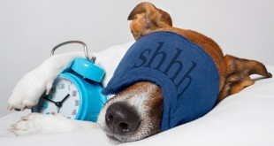 5 Interesting Facts Revealing What Your Dog Dreams About