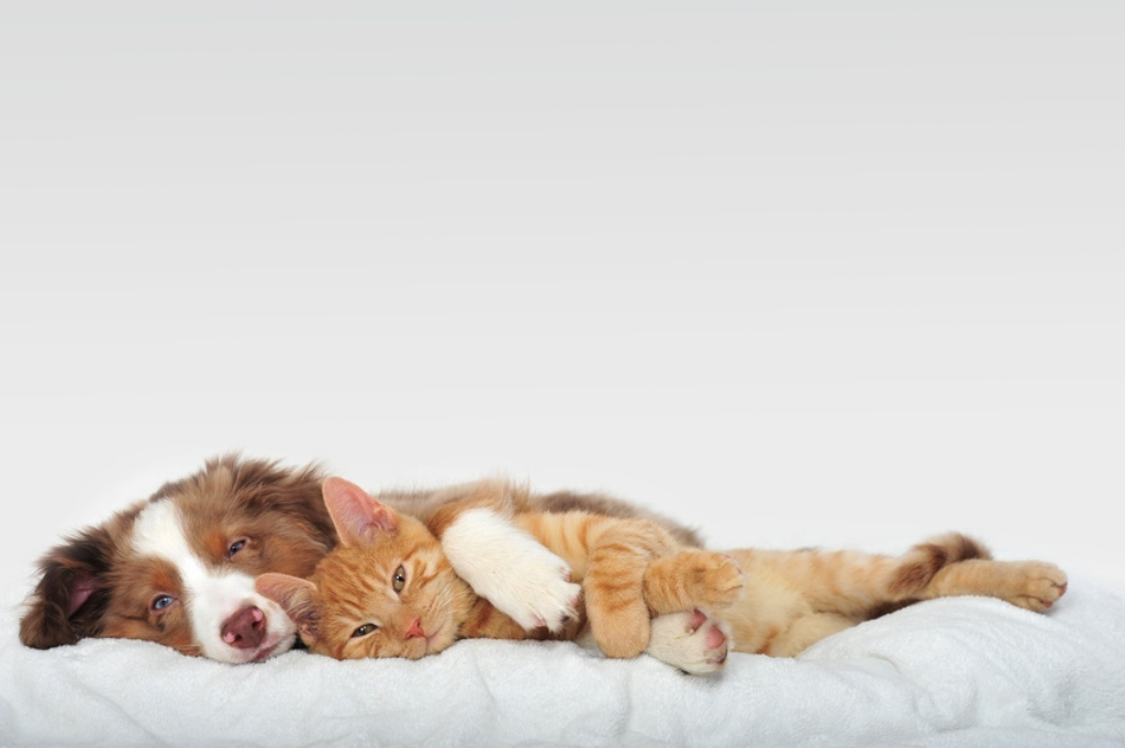 5-Interesting-Facts-Revealing-What-Your-Dog-Dreams-About-4 5 Interesting & Weird Facts Revealing What Your Dog Dreams About