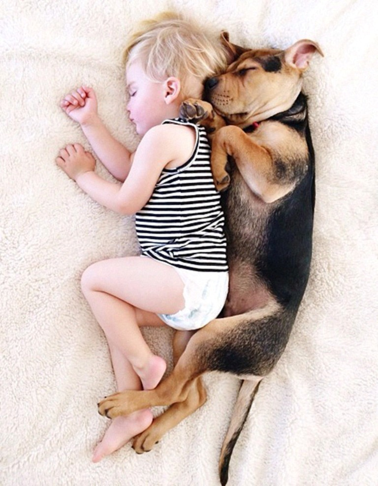 5-Interesting-Facts-Revealing-What-Your-Dog-Dreams-About-8 5 Interesting & Weird Facts Revealing What Your Dog Dreams About