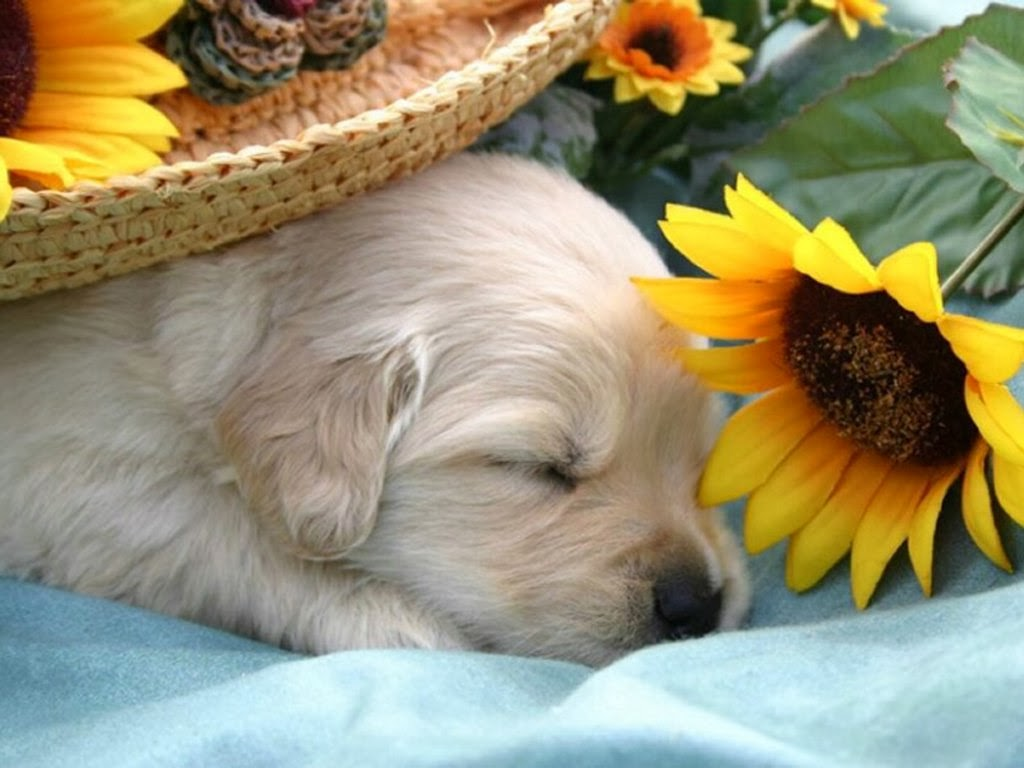 5-Interesting-Facts-Revealing-What-Your-Dog-Dreams-About-9 5 Interesting & Weird Facts Revealing What Your Dog Dreams About