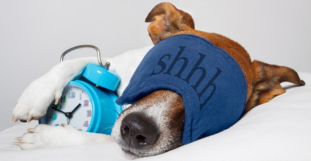 Photo of 5 Interesting & Weird Facts Revealing What Your Dog Dreams About
