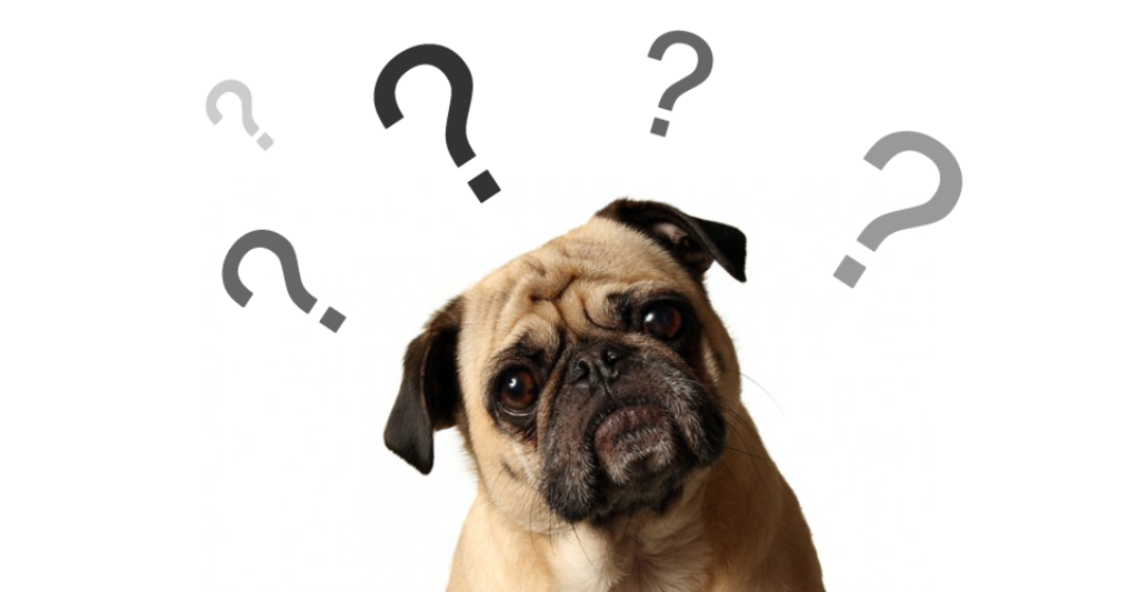 How-Can-I-Stop-My-Dog-from-Digging-1 How Can I Stop My Dog from Digging?