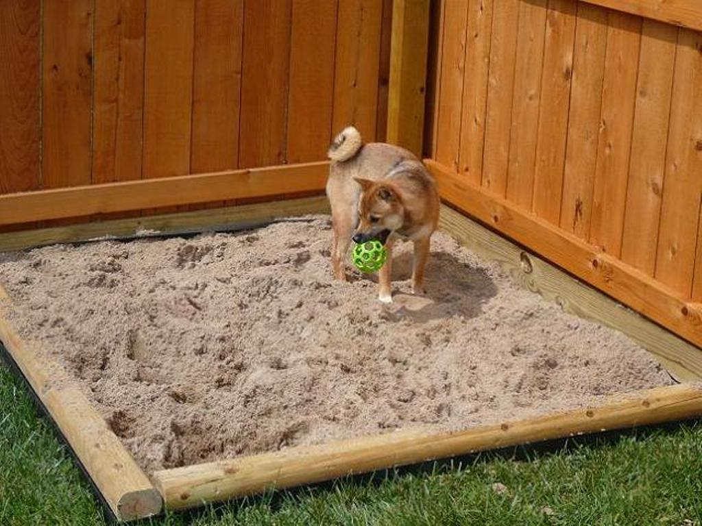 How-Can-I-Stop-My-Dog-from-Digging-13 How Can I Stop My Dog from Digging?