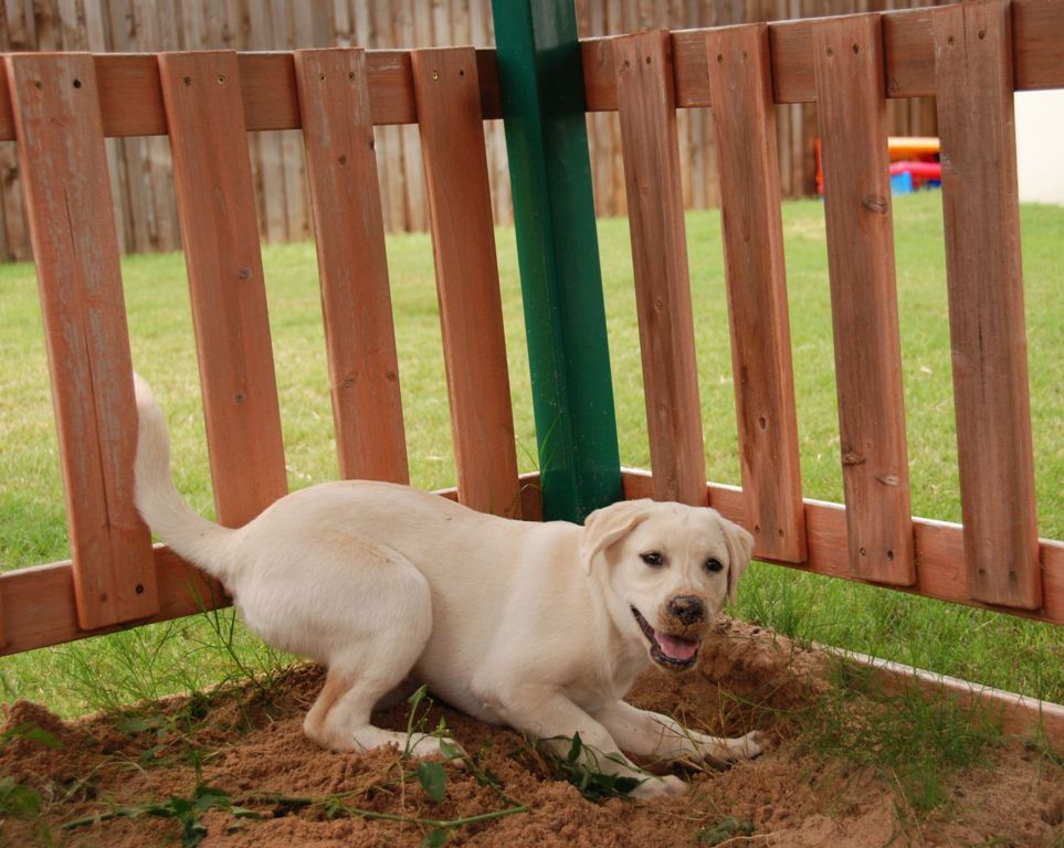 How-Can-I-Stop-My-Dog-from-Digging-14 How Can I Stop My Dog from Digging?