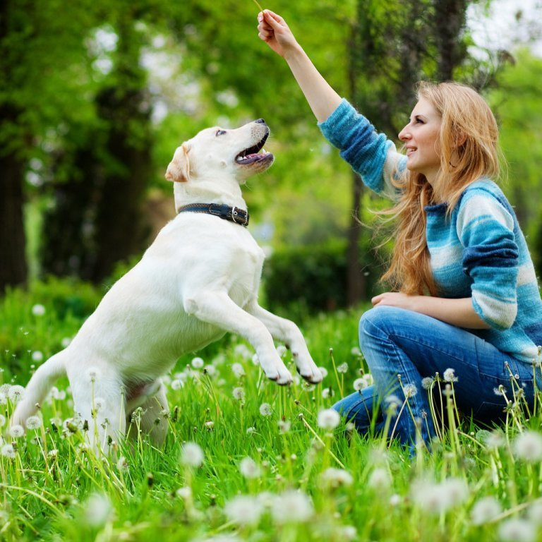 How-Can-I-Stop-My-Dog-from-Digging-2 How Can I Stop My Dog from Digging?