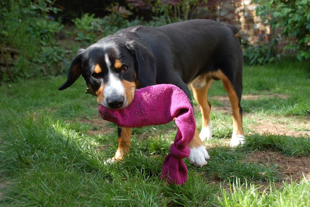 How-Can-I-Stop-My-Dog-from-Digging-22 How Can I Stop My Dog from Digging?