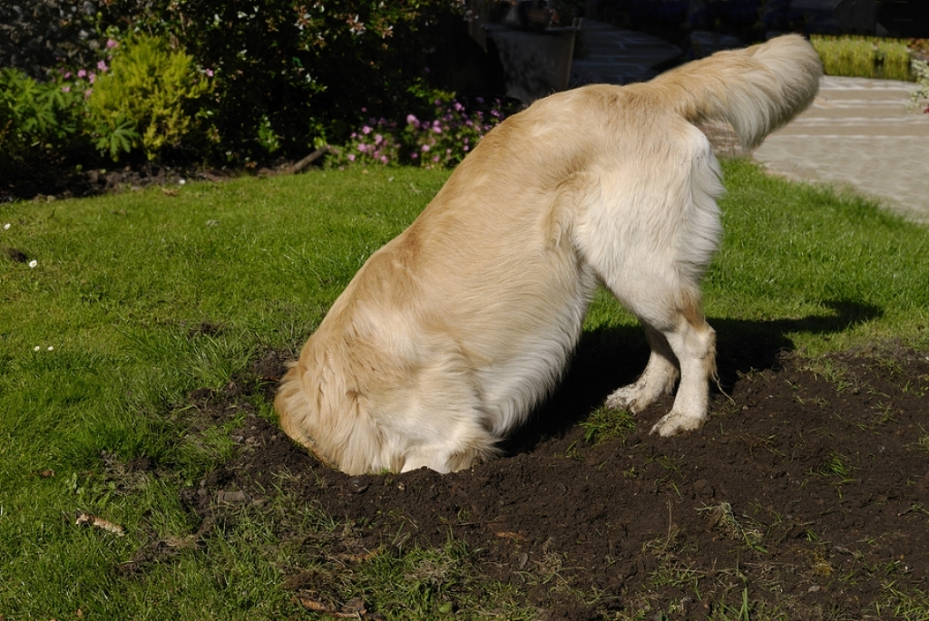 How-Can-I-Stop-My-Dog-from-Digging-7 How Can I Stop My Dog from Digging?
