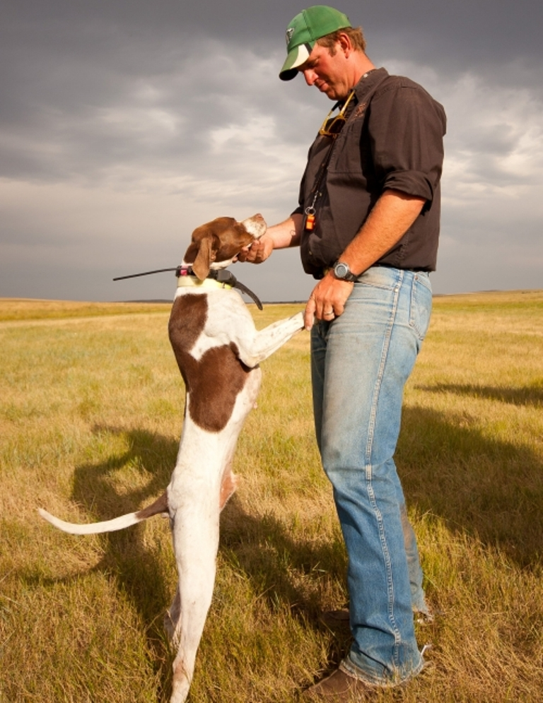 "Pointer-Dog-""The-Perfect-Choice-for-Hunters""-15 7 Exciting Pointer Dog Breed Facts ""The Perfect Choice for Hunters"""