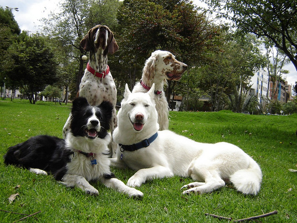 """Pointer-Dog-""""The-Perfect-Choice-for-Hunters""""-17 7 Exciting Pointer Dog Breed Facts """"The Perfect Choice for Hunters"""""""