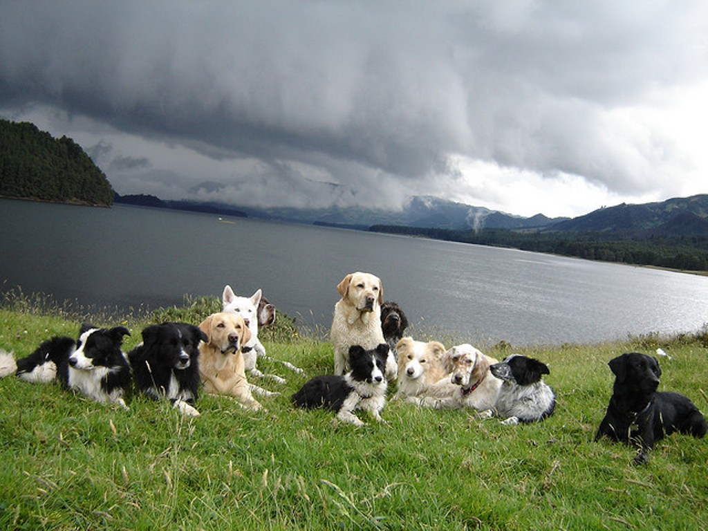 """Pointer-Dog-""""The-Perfect-Choice-for-Hunters""""-18 7 Exciting Pointer Dog Breed Facts """"The Perfect Choice for Hunters"""""""