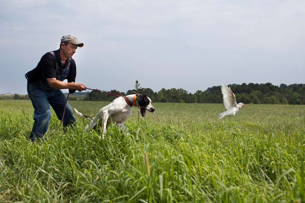 "Pointer-Dog-""The-Perfect-Choice-for-Hunters""-6 7 Exciting Pointer Dog Breed Facts ""The Perfect Choice for Hunters"""