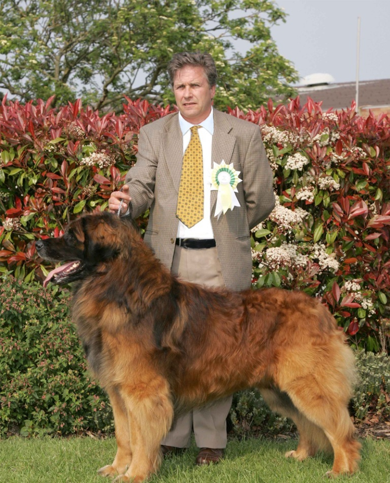"""The-Giant-Leonberger-Dog-""""The-New-Lion""""-3 5 Hottest Facts About Giant Leonberger Dog """"The New Lion"""""""