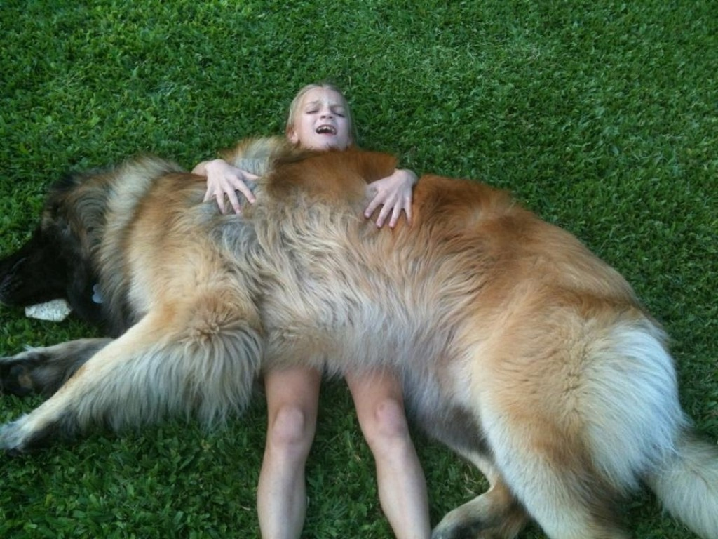 """The-Giant-Leonberger-Dog-""""The-New-Lion""""-8 5 Hottest Facts About Giant Leonberger Dog """"The New Lion"""""""