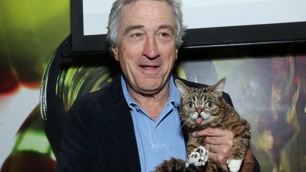 What-Is-the-Secret-behind-Lil-Bub's-Unique-Appearance-14 What Is the Secret behind Lil Bub's Unique Appearance?