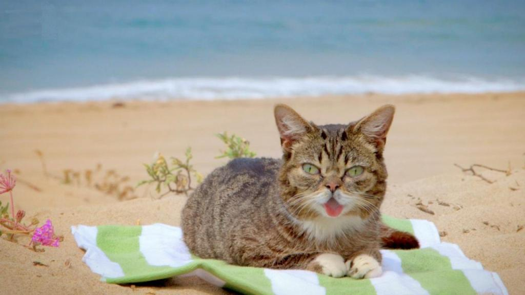 What-Is-the-Secret-behind-Lil-Bub's-Unique-Appearance-22 What Is the Secret behind Lil Bub's Unique Appearance?