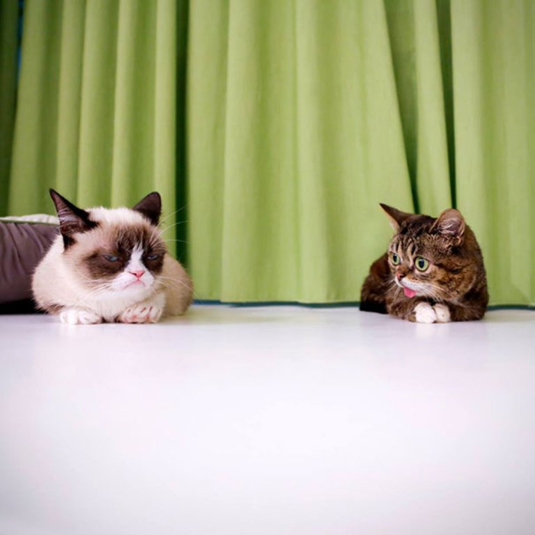 What-Is-the-Secret-behind-Lil-Bub's-Unique-Appearance-24 What Is the Secret behind Lil Bub's Unique Appearance?