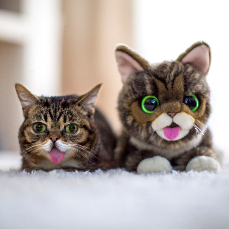 What-Is-the-Secret-behind-Lil-Bub's-Unique-Appearance-9 What Is the Secret behind Lil Bub's Unique Appearance?