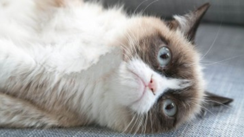 Why-Is-the-Grumpy-Cat-Always-Angry-1 Why Is the Grumpy Cat Always Angry?