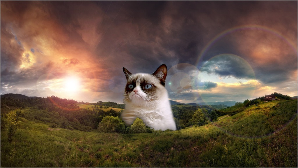 Why-Is-the-Grumpy-Cat-Always-Angry-11 Why Is the Grumpy Cat Always Angry?