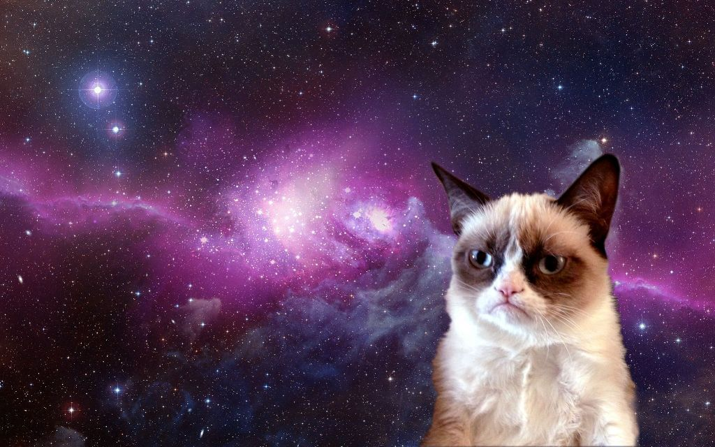 Why-Is-the-Grumpy-Cat-Always-Angry-12 Why Is the Grumpy Cat Always Angry?