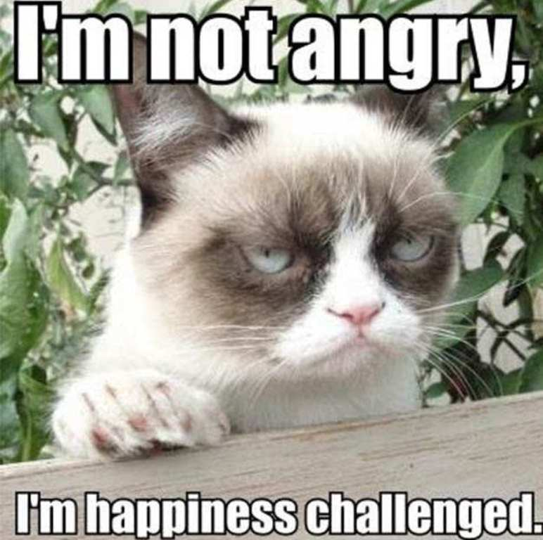 Why-Is-the-Grumpy-Cat-Always-Angry-14 Why Is the Grumpy Cat Always Angry?